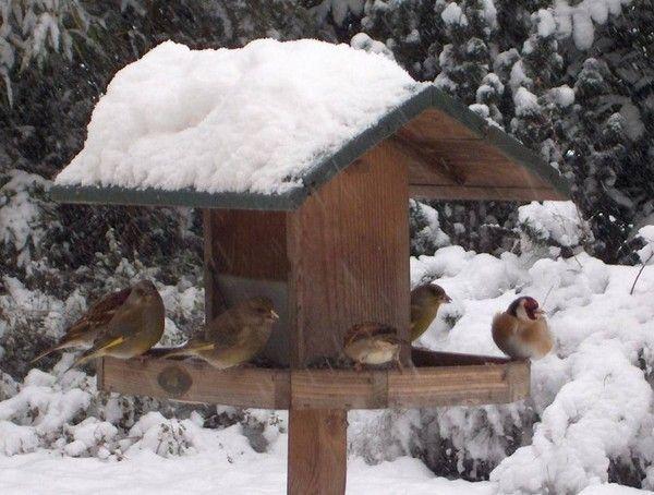 10 146  Janvier 2015  l oiseau a froid,,,,,