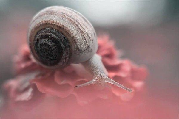 9010  Mai 2014  mon amie aime les escargots,,,,Noémie