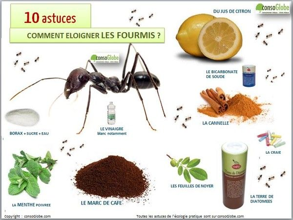 11 030 juillet 2015 on part en guerre contre les fourmisss