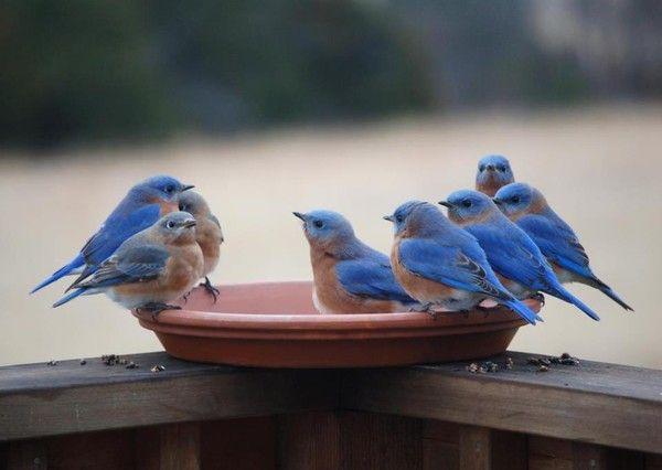 9966 Novembre 2014 les oiseaux chantent, pour nous,,,