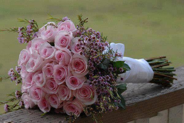 11 232 septembre 2015 La vie en rose pour mes amies