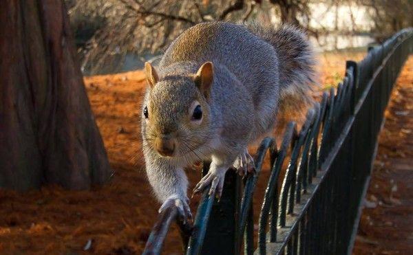 9622 septembre 2014 l écureuil , j aime