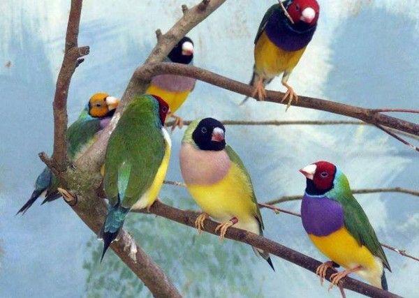 9141 JUIN  2014   les oiseaux chantent ,,,,