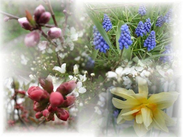 457 mars-2011 le printemps